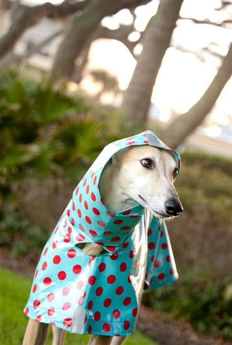 Dog Raincoat Slicker Red Polka Dots on Turquoise by TreeParlor