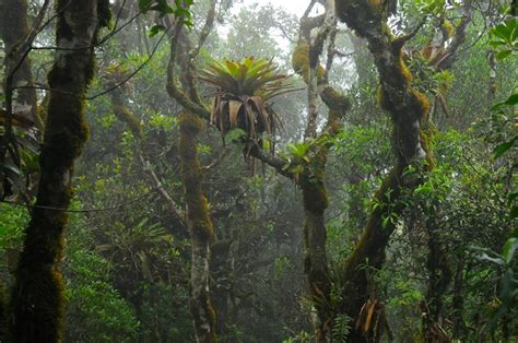 """Plants move water """"the wrong way"""" in tropical cloud forest"""