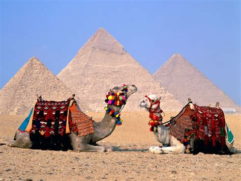 Egypt Cairo Camels Wallpapers | HD Wallpapers | ID #5821