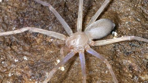 Hundreds of new species found in Greater Mekong - CBBC